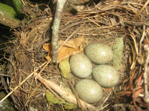 bébé oiseaux Photo-589-1d8f3c4