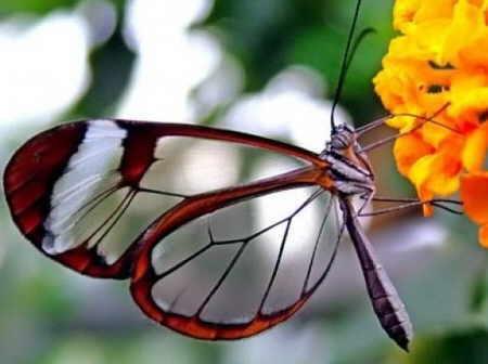 http://img28.xooimage.com/files/0/8/2/mariposas-transparentes-06-15b5e8a.jpg