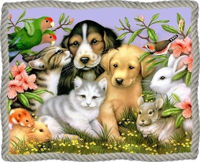 beaux-animaux-cadre-flora