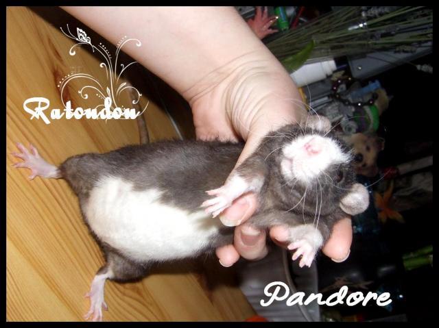 RTD Pandore xXx Spoutnik, les knakis sont nés! Dscf8003-133f549