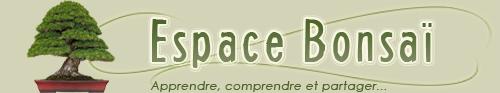 bandeau du site Espace Bonsaï