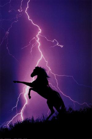 gif-cheval-éclair-fanfan