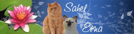 7 chiots Golden cherchent à être adoptés ! Banniere-12ed084