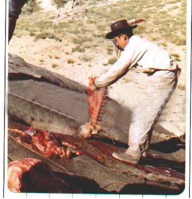 Un jeune homme asiatiqe sort son père de sa tombe et couper le corps 18959692qx0-1502e8d